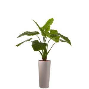HTT - Kunstplant Philodendron in Clou rond taupe H165 cm - kunstplantshop.nl
