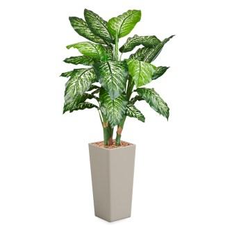 HTT - Kunstplant Dieffenbachia in Clou vierkant taupe H185 cm - kunstplantshop.nl