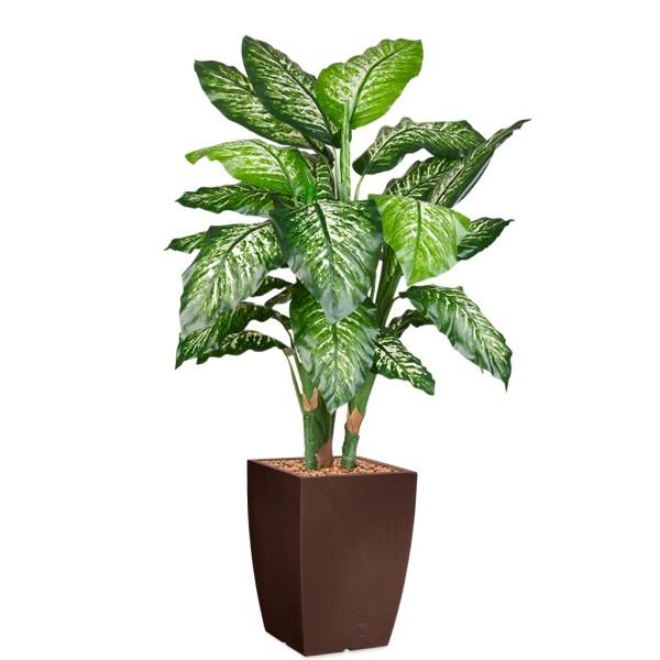 HTT - Kunstplant Dieffenbachia in Genesis vierkant bruin H150 cm - kunstplantshop.nl