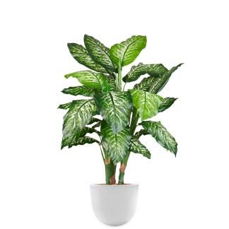 HTT - Kunstplant Dieffenbachia in Eggy wit H130 cm - kunstplantshop.nl