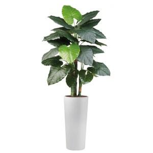 HTT - Kunstplant Philodendron in Clou rond wit H185 cm - kunstplantshop.nl