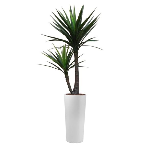 HTT - Kunstplant Yucca in Clou rond wit H185 cm - kunstplantshop.nl