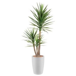 HTT - Kunstplant Yucca in Genesis rond wit H200 cm - kunstplantshop.nl