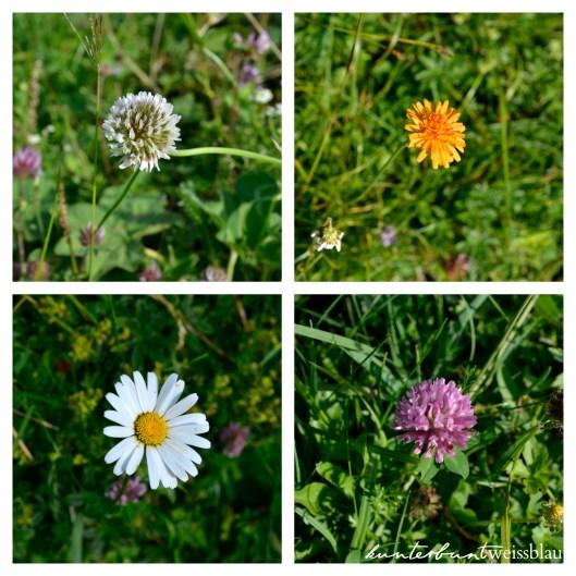 Blumen Collage kwb