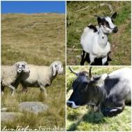 Tiere Südtirol kwb