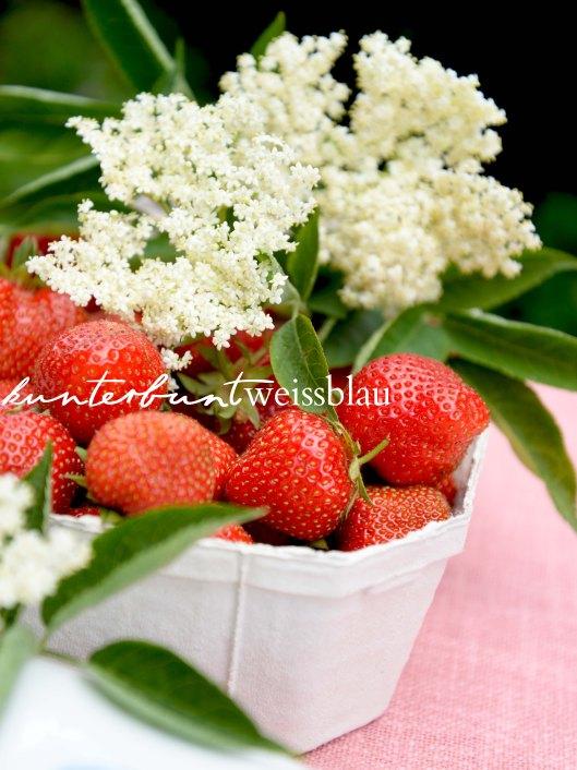 Erdbeer Hugo II