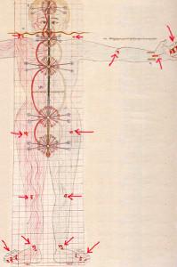 схема движения энергии Ла в теле из Атласа Тибетской Медицины