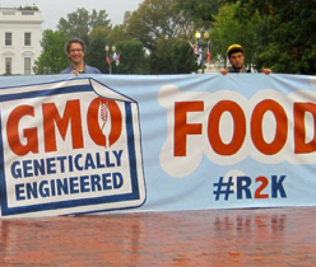 10 Questions About Gmos Youve Been Too Embarrassed To Ask