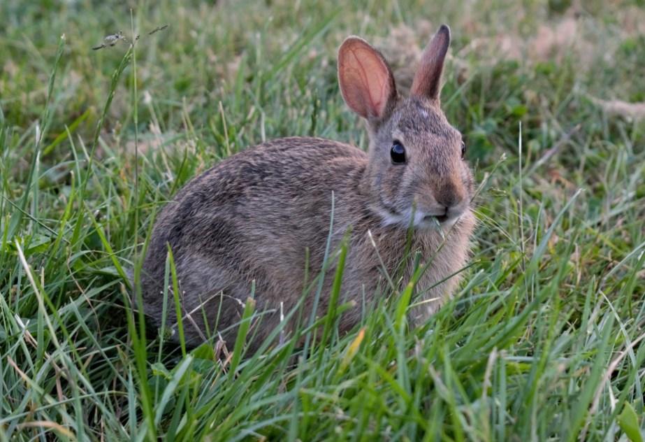 kuow seattle rabbits seem