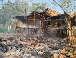 Kandang Ayam Milik Rubiyanto Ludes Terbakar,  Kerugian Ditaksir Mencapai Puluhan Juta
