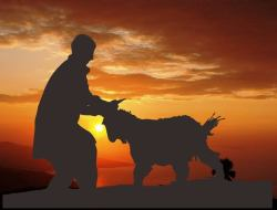 Lima Hikmah Berkurban di Hari Raya Idul Adha