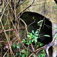 西表島の船浮集落にある「特攻艇秘匿壕」