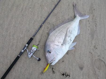 81cm サーフ真鯛