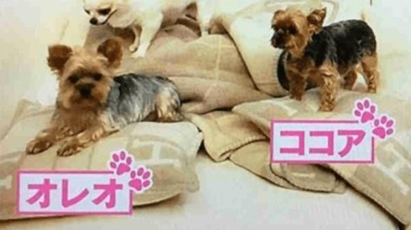 あゆみ 犬 浜崎