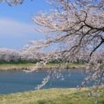 白石川堤一目千本桜の花見の混雑や駐車場の穴場やアクセスは?