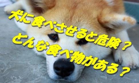 犬(愛犬)にとって危険な食べ物10選!意外なものも?