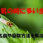 湿気が原因で来る「あの」害虫の名前は?害虫の駆除方法や対策も!