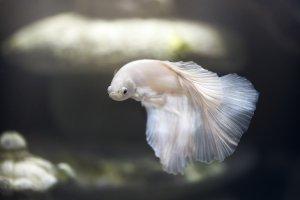 身近にある魚へんの漢字を見てみよう!