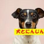 犬ににんじんを食べさせても大丈夫?栄養や注意点について解説!