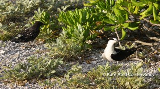Adult and fledglings