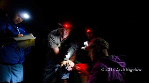Christmas Shearwater Banding and Surveys