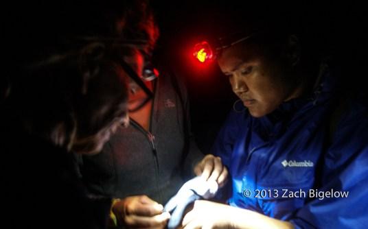Christmas Shearwater Banding and Surveys