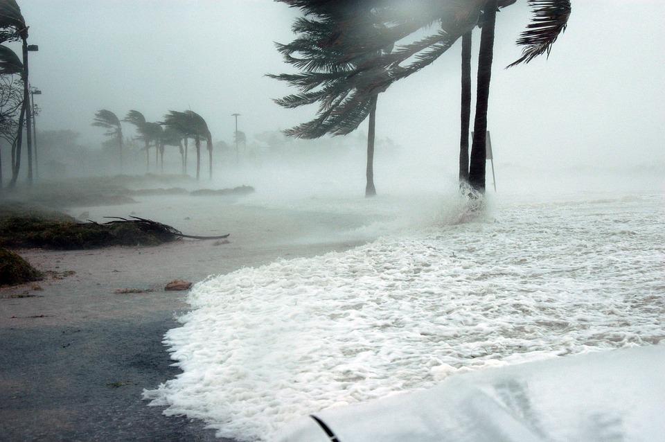 停電 影響 被害 サンゴ ソフトコーラル 台風 溶ける 酸欠