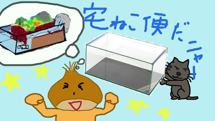水槽キタァ~ッ!めだかの学校アクアテラリウム構想 遂に本格始動!!