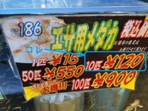 餌用メダカ10匹120円税込み