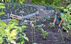 Niektóre połacie ogrodu zostały już zasadzone Fot. Marian Paluszkiewicz