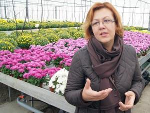 Jak zaznaczyła dyrektorka Sigita Kairienė, uprawa tych kwiatów wymaga cierpliwości i sporo ogrodniczych zabiegów<br/>Fot. Marian Paluszkiewicz