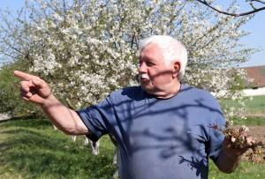 Stanisław Wasilewski pokazuje sad, który pięknie kwitnie i cieszy się, że będzie owocował orzech włoski Fot. Marian Paluszkiewicz