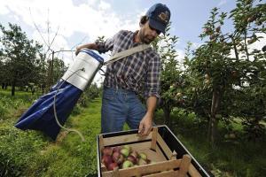 """""""Rossielchoznadzor"""" ogłosił o zakazie importu warzyw i owoców z Polski i innych krajów UE    Fot. archiwum"""