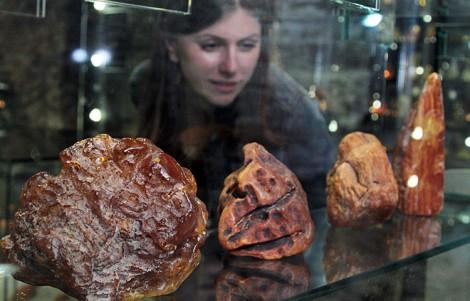 W wileńskim muzeum można obejrzeć różne odmiany bałtyckiego bursztynu. Największy kawałek na ekspozycji waży około 3 kilogramów Fot. Marian Paluszkiewicz
