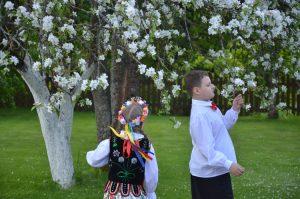 Kwitnące jabłonie budzą zachwyt Fot. Teresa Worobiej