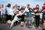 Obrońcy praw zwierząt domagają się lepszej pracy instytucji państwowych