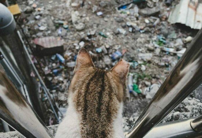Ludzkie śmieci – globalny problem zwierząt małych i dużych