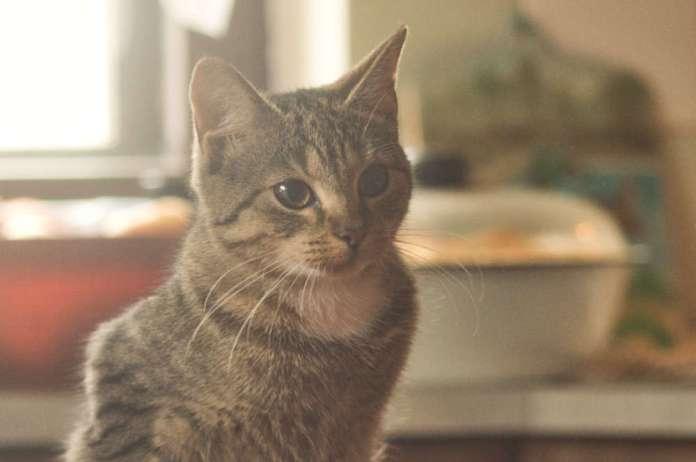 Kotka siedzi i patrzy.