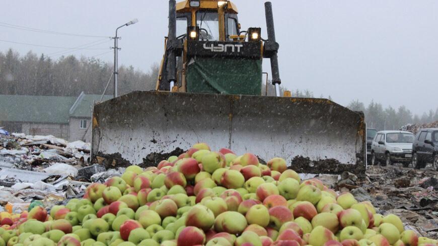 Не смог молчать: в ЕАО по наводке гражданина уничтожили почти 2,5 центнера санкционных яблок