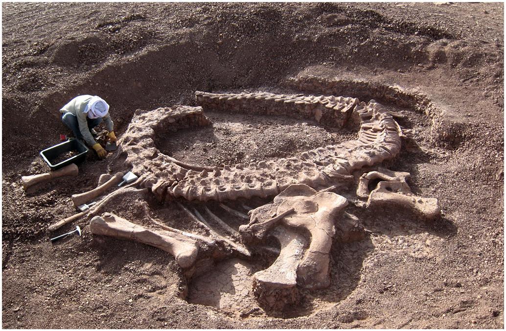 По территории ЕАО раньше бродили динозавры? Ещё как!