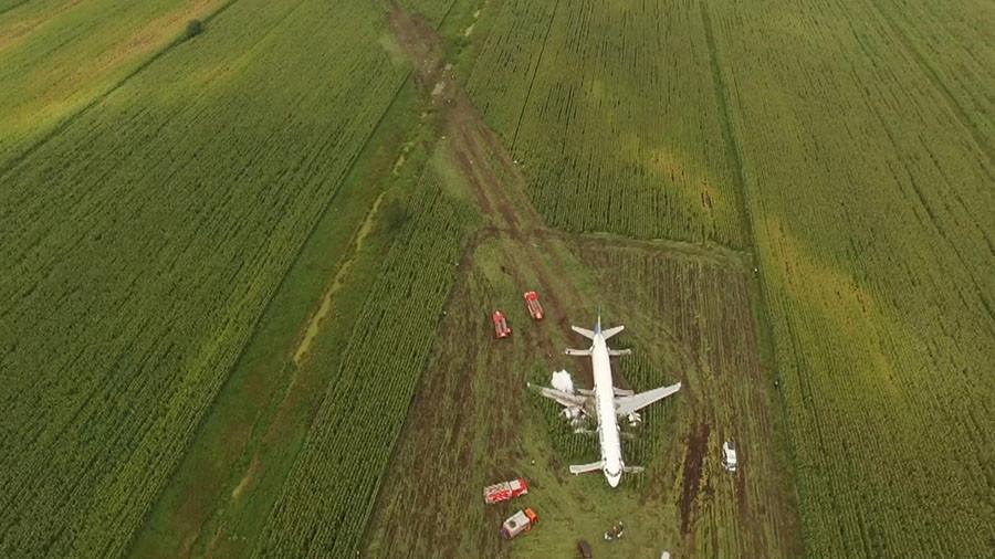 А321 в кукурузном поле