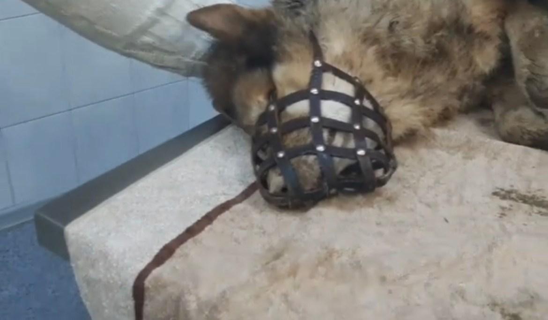 В Биробиджане пёсик угодил в заброшенный колодец и почти замёрз в одиночестве (ВИДЕО)