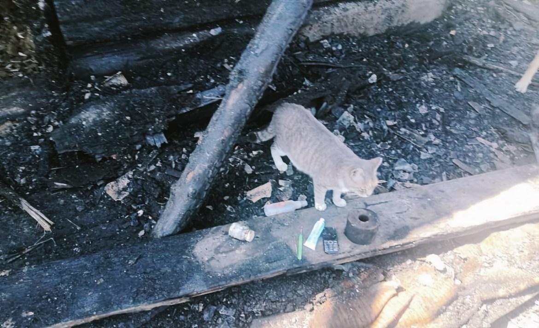Ночью в Биробиджане кошка настойчиво пыталась смыться из частного дома и разбудила хозяйку