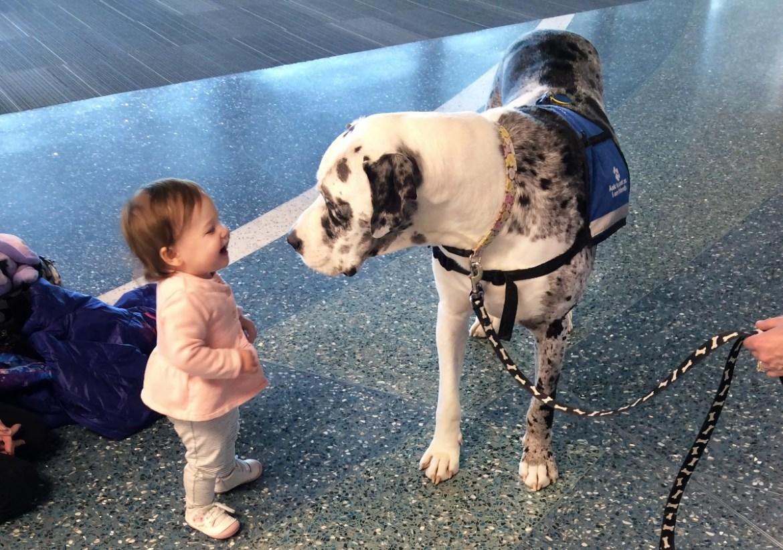 «Аэрофлот» учит служебных собак «вынюхивать» в пассажиропотоке больных COVID-19