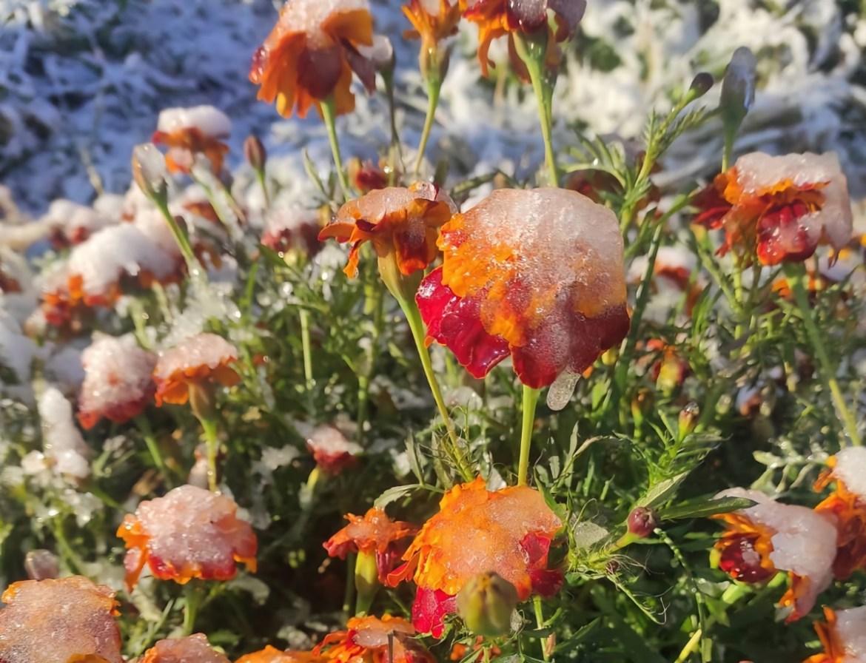 В Смидовичском районе ЕАО выпал первый снег (ВИДЕО)
