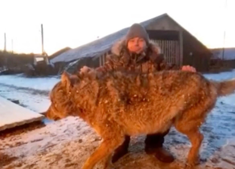 Британская The Daily Mail посвятила материал суровому фермеру из ЕАО, задушившему волчицу голыми руками