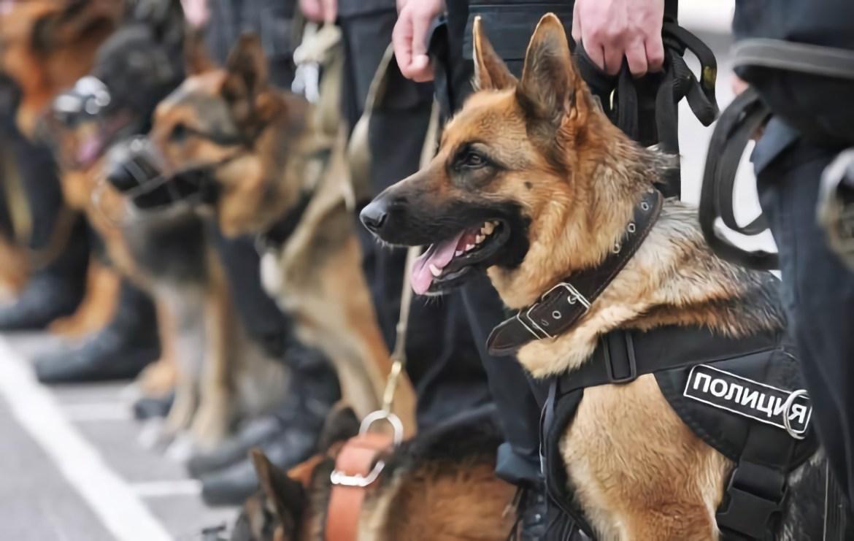 Собака Грация вывела полицейских на грабителя в Биробиджане
