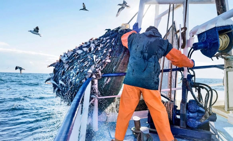 Экспорт российской рыбы в Китай «в коме» из-за антиковидных ограничений, почему на внутреннем рынке российская рыба не дешевеет?