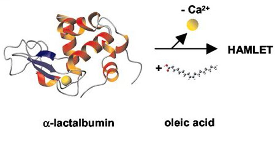 Gráfico de la síntesis del HAMLET