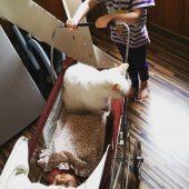 Katze im Puppenwagen